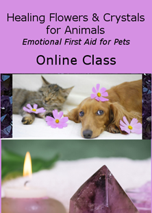 Picture of Healing Flower Essences & Crystals for Animals